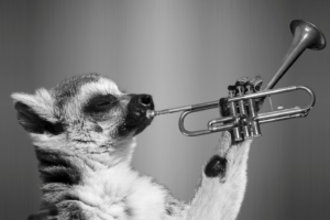 Funny animal playing saxophone